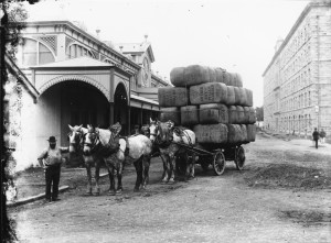 Carting_wool_bales,_Australia,_1900